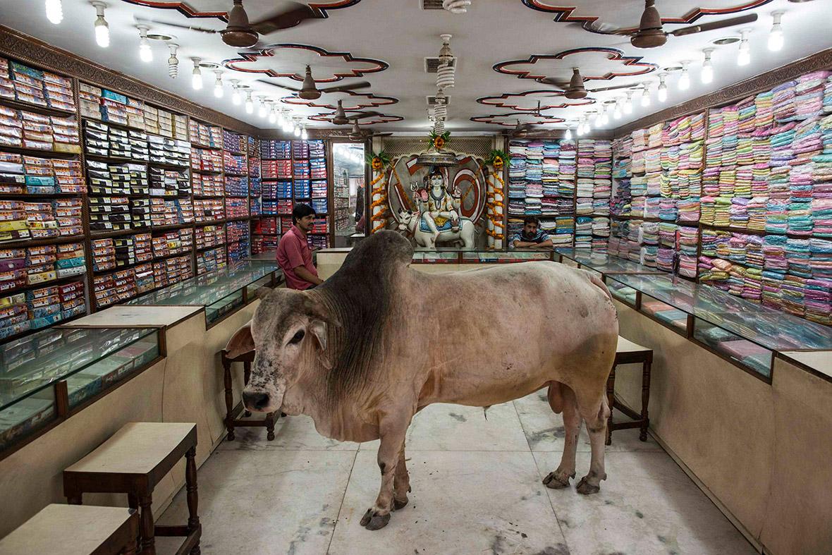 bull-shop